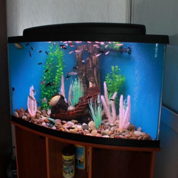 Фото аквариума из оргстекла