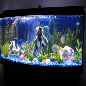 Подробное описание аквариума из оргстекла